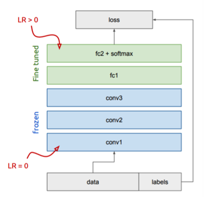 illustration of [Fine-tuning  concept+ frozen](https://towardsdatascience.com/a-comprehensive-hands-on-guide-to-transfer-learning-with-real-world-applications-in-deep-learning-212bf3b2f27a)